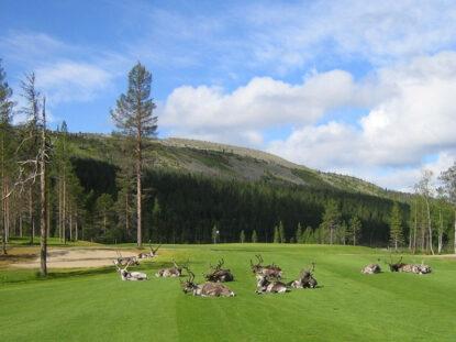 Panorama Open on Levillä järjestettevä elämyksellinen golfkisa.